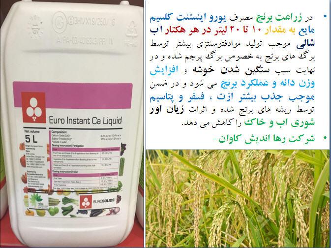 تغذیه برنج ( قسمت دوم ) 1