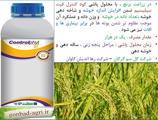 تغذیه برنج ( قسمت چهارم ) 1