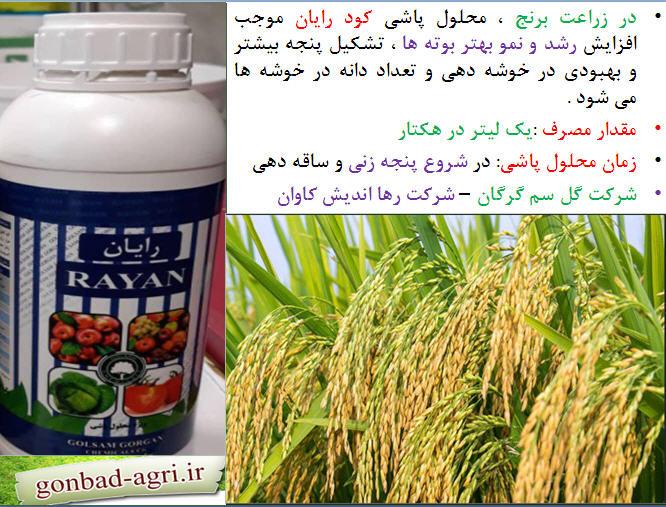 تغذیه برنج ( قسمت پنجم) 1
