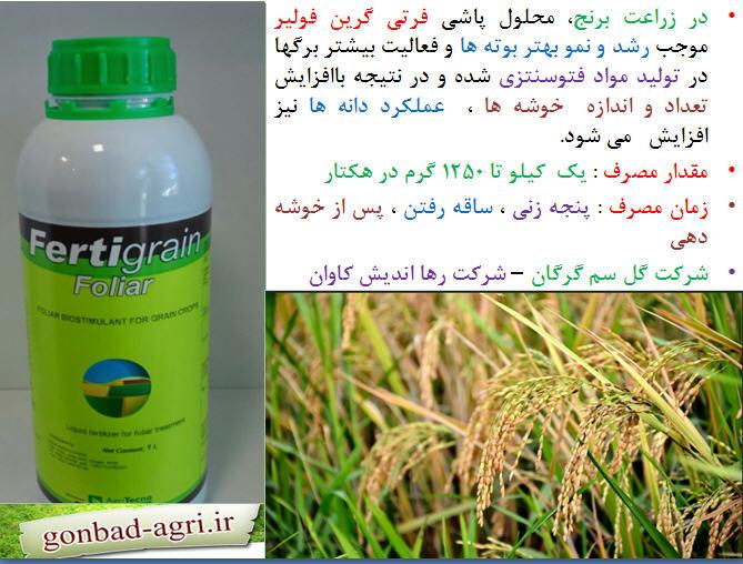 تغذیه برنج ( قسمت ششم) 1