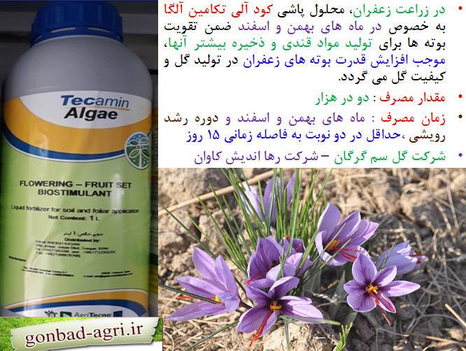 کود آلی تکامین الگا برای تقویت گلدهی در بوته های زعفران 1