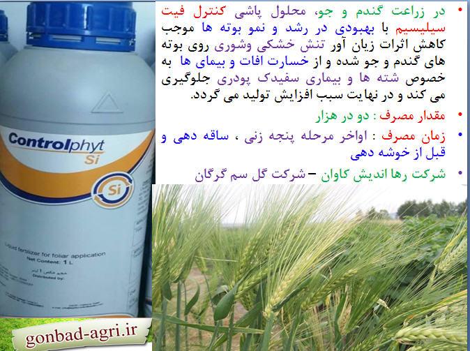 زراعت گندم و جو و کنترل فیت سلیسیم 1