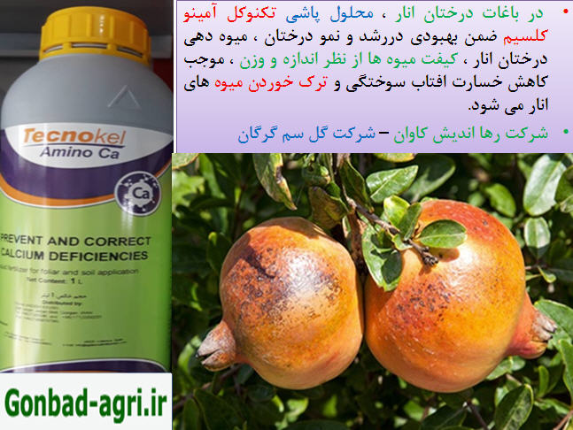 کود تکنوکل امینو کلسیم برای بهبودی در میوه دهی درختان انار 1