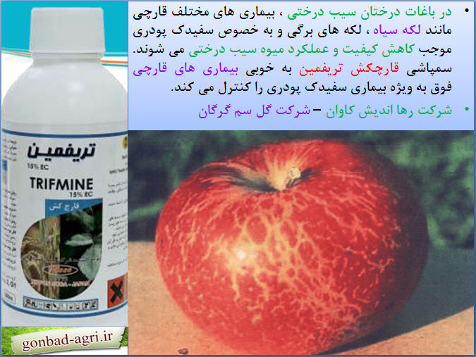 قارچکش تریفمین برای کترل بیماری های قارچی سیب درختی 1