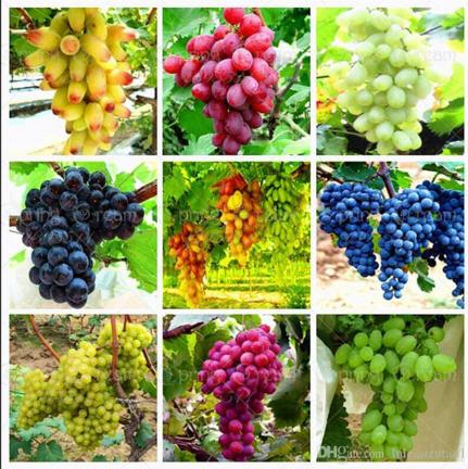 کشاورزی پایدار 1