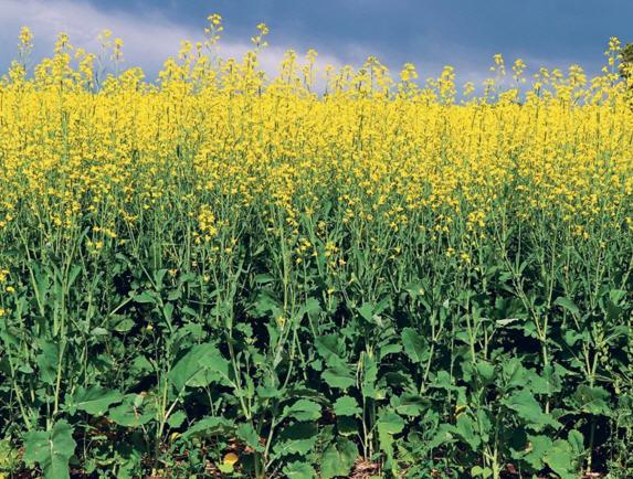 کشاورزی پایدار 2