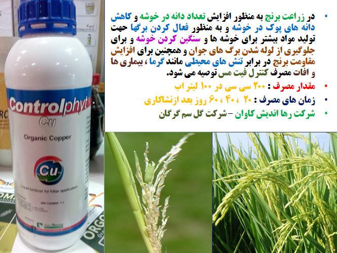 تغذیه برنج ( قسمت سوم ) 1