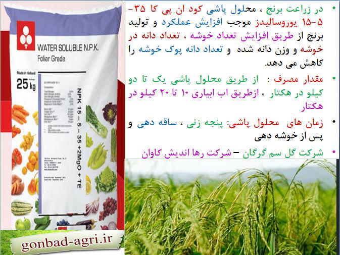 تغذیه برنج ( قسمت هفتم) 35