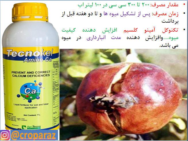 کود تکنوکل امینو کلسیم برای بهبودی در میوه دهی درختان انار 11