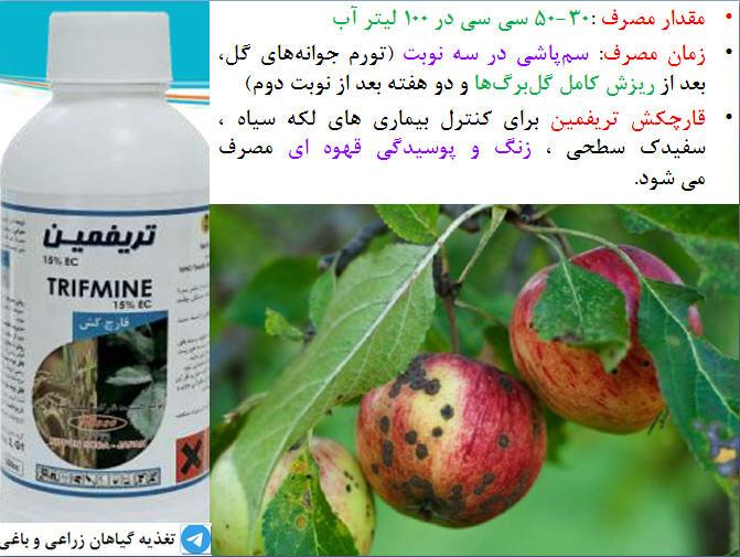 قارچکش تریفمین برای کترل بیماری های قارچی سیب درختی 7