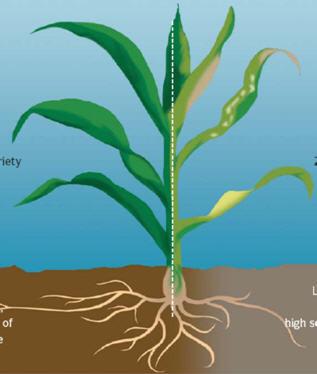 تغذیه گیاهان زراعی و انواع کود های شیمیایی 1